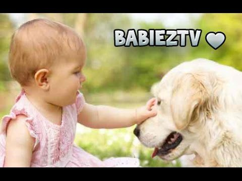 Labrador Dogs Playing With Cute Babies Compilation Mai 2015 [HD VIDEO]
